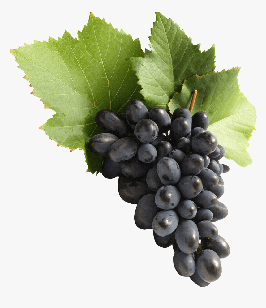 Grapes Png, Transparent Png, Free Download
