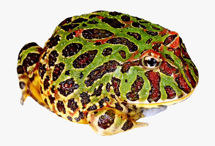 Toad Clipart Png - Png Pac Man Frog, Transparent Png, Free Download