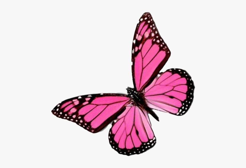 Flying Pink Butterfly Png Image Background - Pink ...