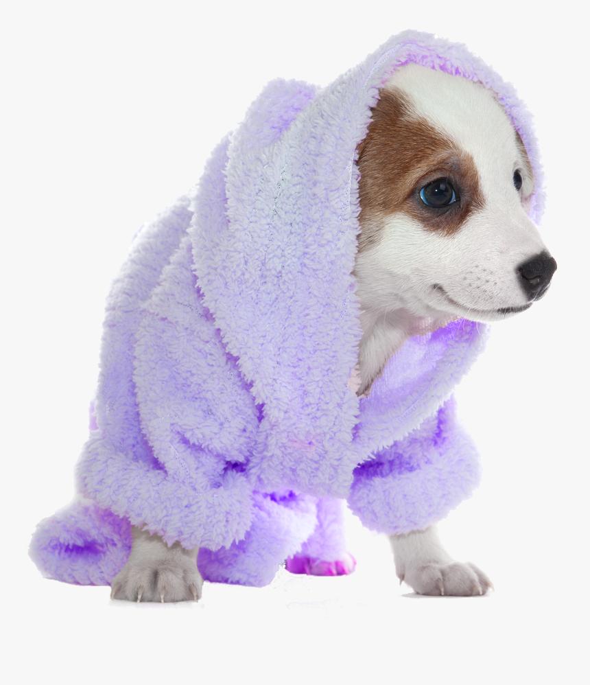 Dog Bath Png, Transparent Png, Free Download