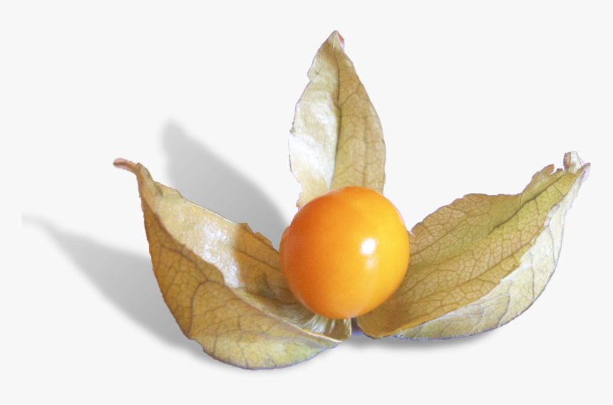 Physalis Is A Delicious Fruit From Peru - Cherry Tomatoes, HD Png Download, Free Download