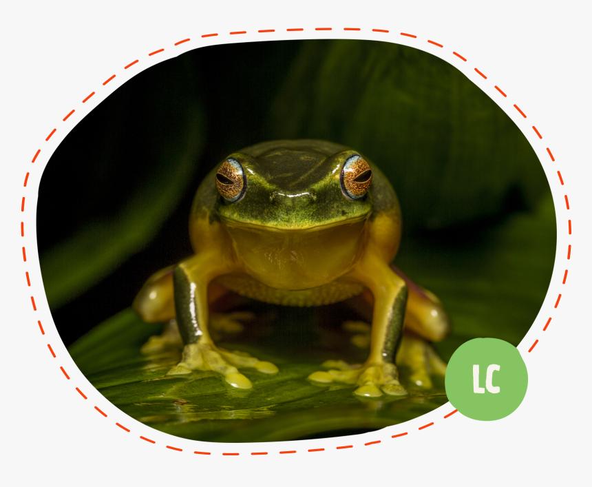 Bullfrog, HD Png Download, Free Download