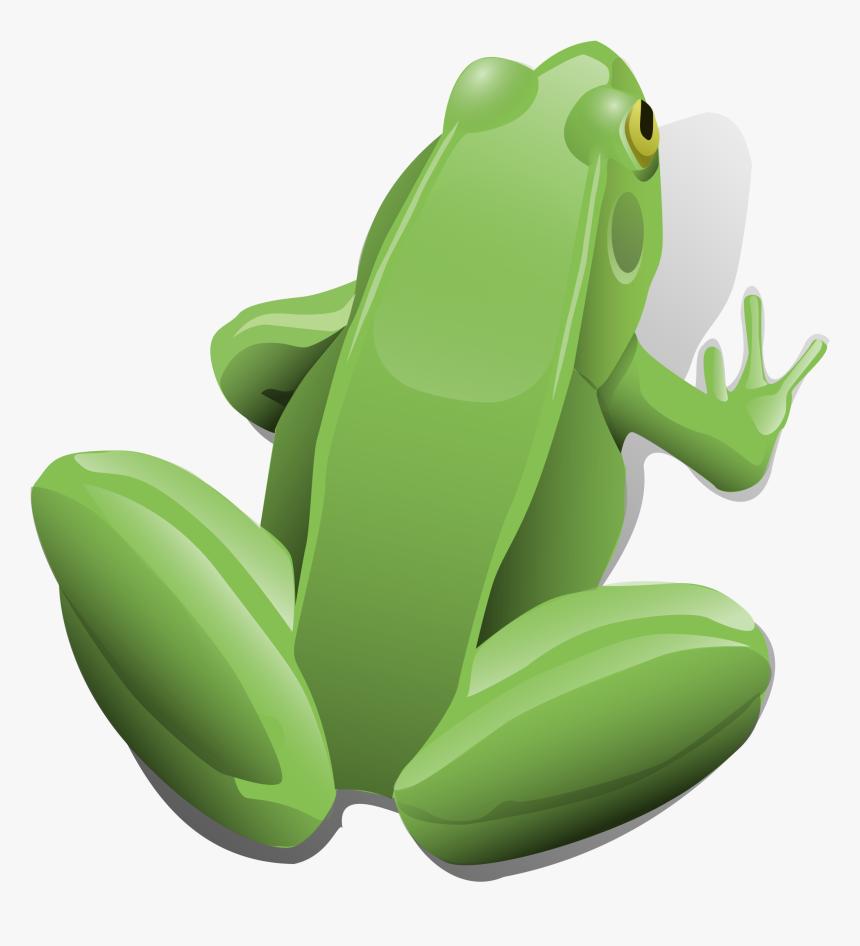 Frog, Amphibian, Aquatic, Sitting, Jumping, Toad, Pond - Frog Clip Art, HD Png Download, Free Download