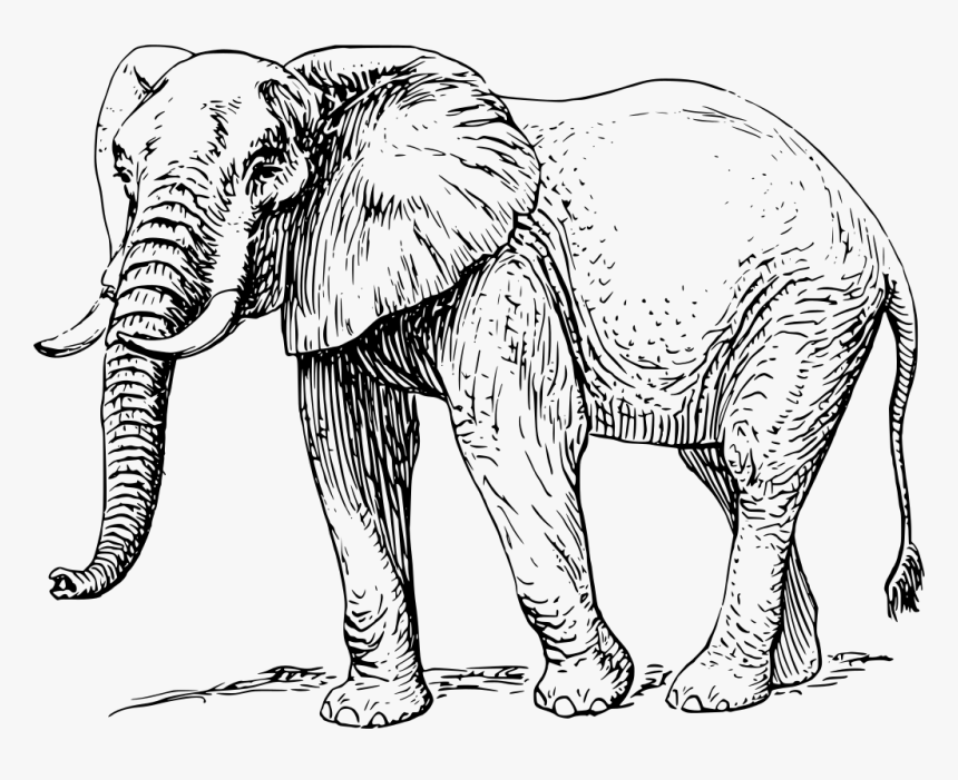 Elephant Black And White, HD Png Download, Free Download