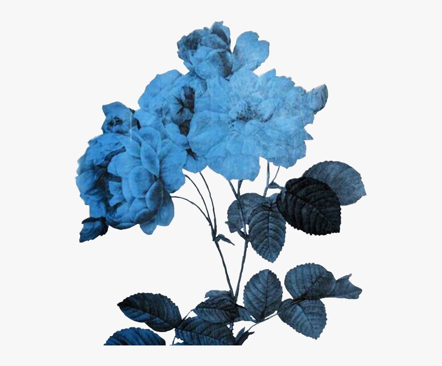 Flower Aesthetic Png Flowerart Art Alternative Freetoed - Transparent Blue Aesthetic Png, Png Download, Free Download