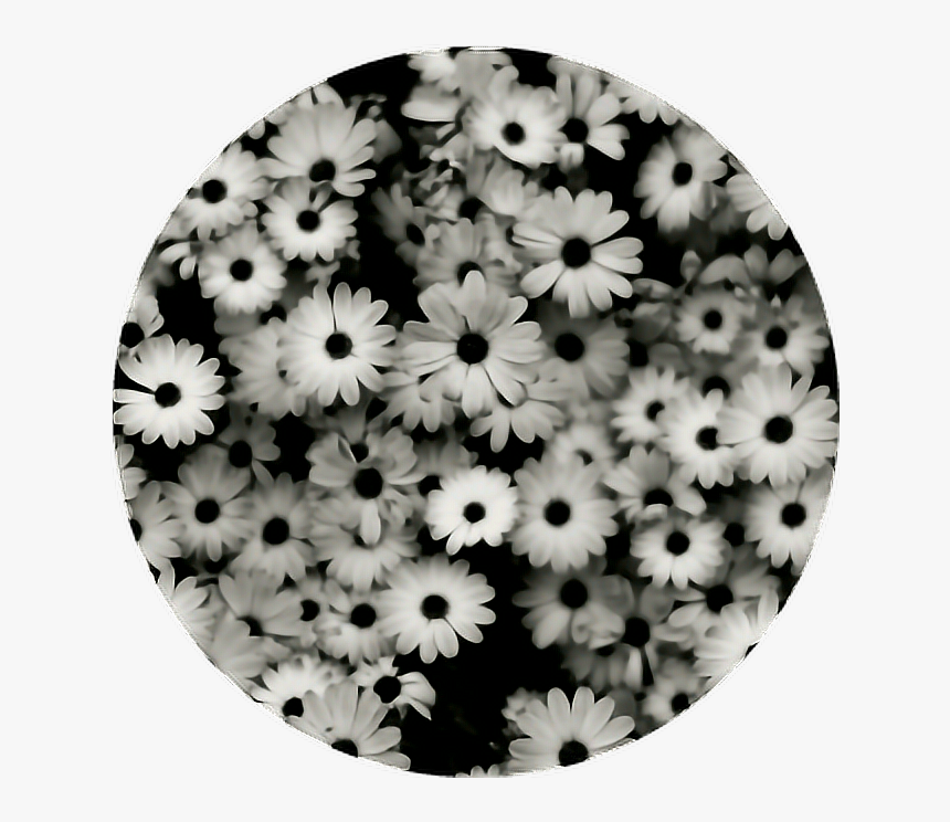 Transparent Aesthetic Flowers Png Ipad Wallpaper Black And White Png Download Kindpng