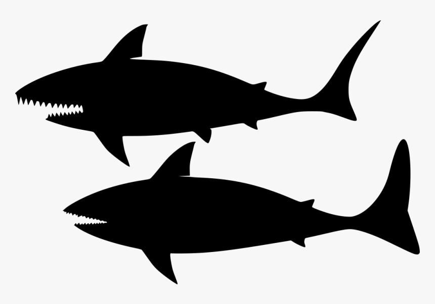 Download Png Shark- - Shark, Transparent Png, Free Download