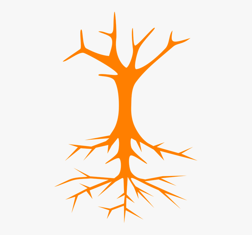 Tree Roots Stem Branches Naked Bare Cross Section Cartoon Tree With Fruit Hd Png Download Kindpng Do you have any on foliage/leaves? tree roots stem branches naked