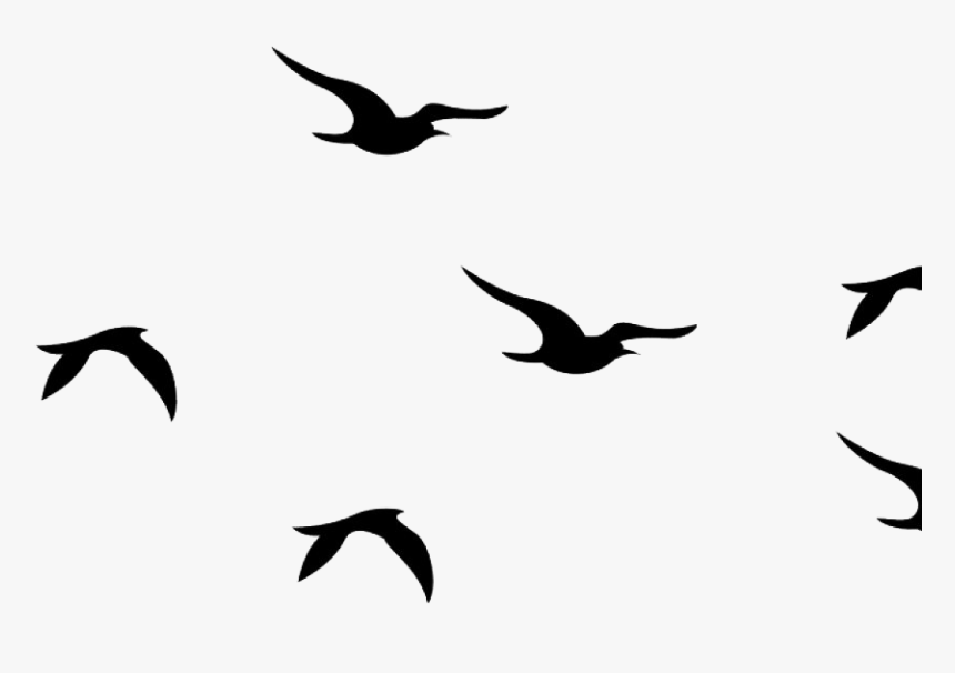 Flying Bird Png High Quality Image - Flying Bird Png Picsart, Transparent Png, Free Download