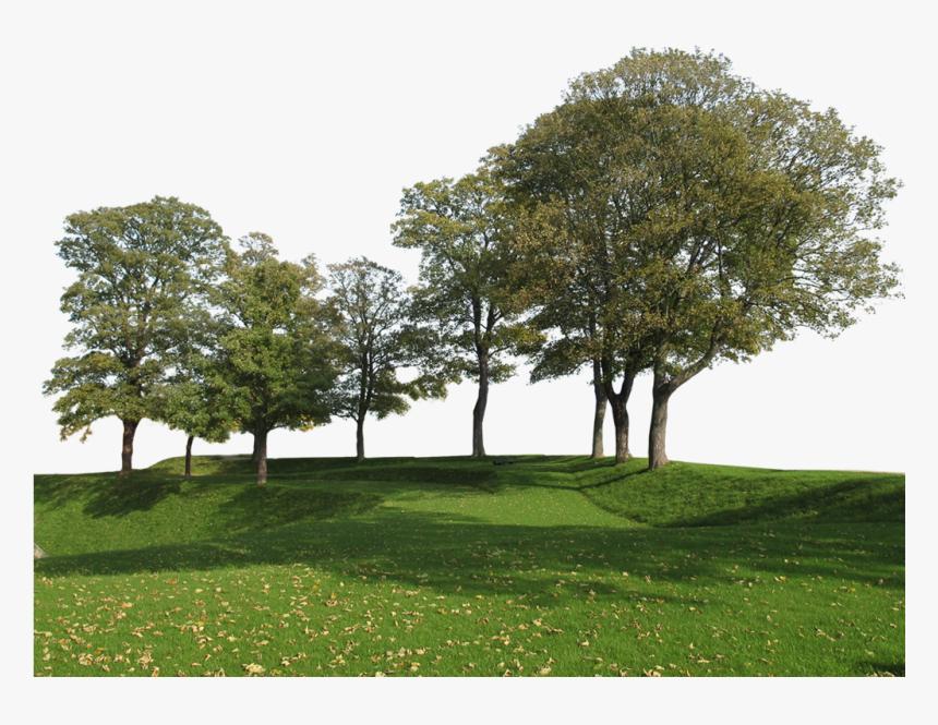 Transparent Big Tree Png, Png Download, Free Download