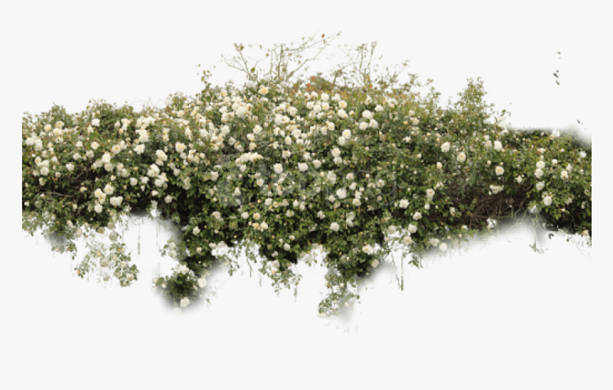 Free Png Download Bushes Free Png Images Background, Transparent Png, Free Download