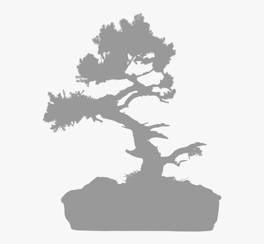 Chinese Elm - Oak, HD Png Download, Free Download