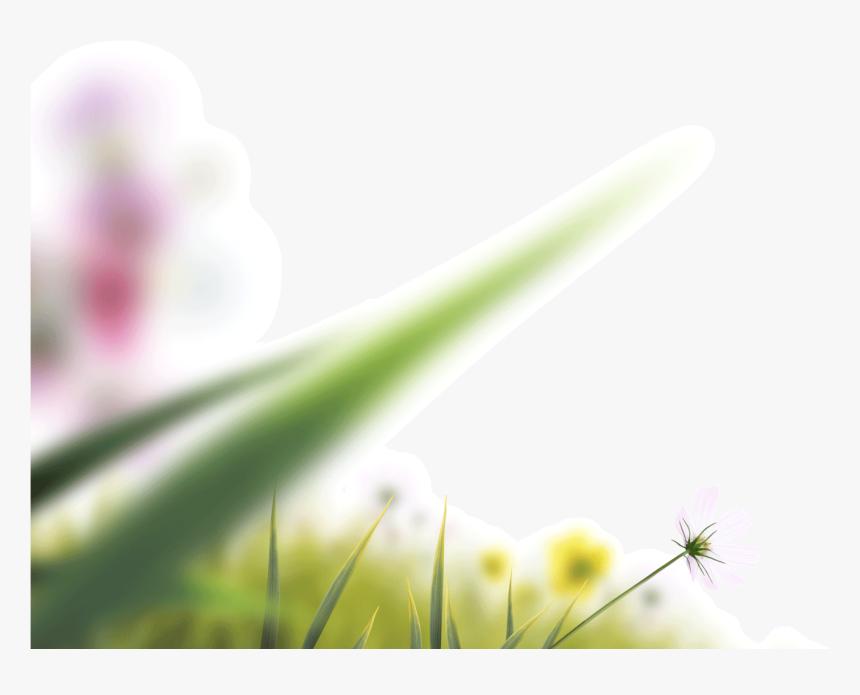 Clip Art Blurry Flowers Blur Grass Png Hd Transparent Png Kindpng