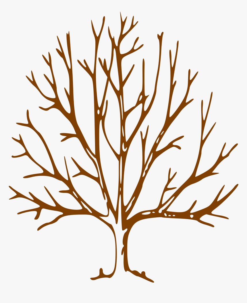 Simple Bare Tree Clipart Image Info Tree Drawing With Branches Hd Png Download Kindpng