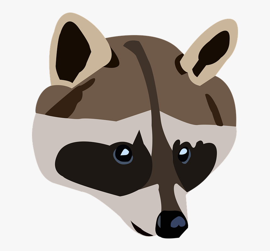 Raccoon Png, Transparent Png, Free Download