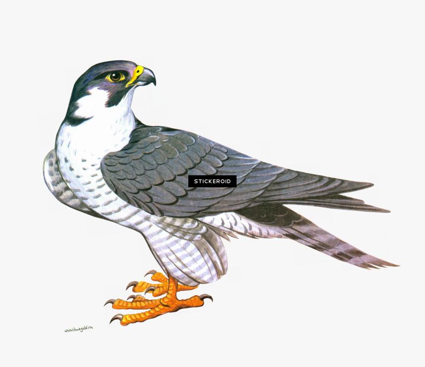 Clip Art Falcon Png , Png Download - Сокол Рисунок, Transparent Png, Free Download