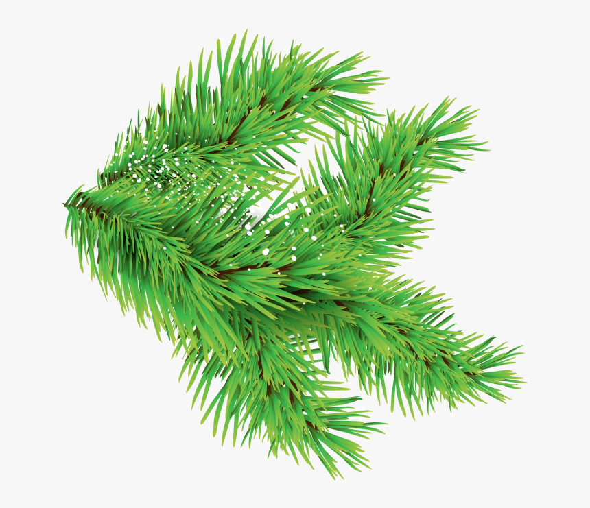 Christmas Trees Leaves Png Images With Different Sizes - Leaf From Christmas Tree, Transparent Png, Free Download