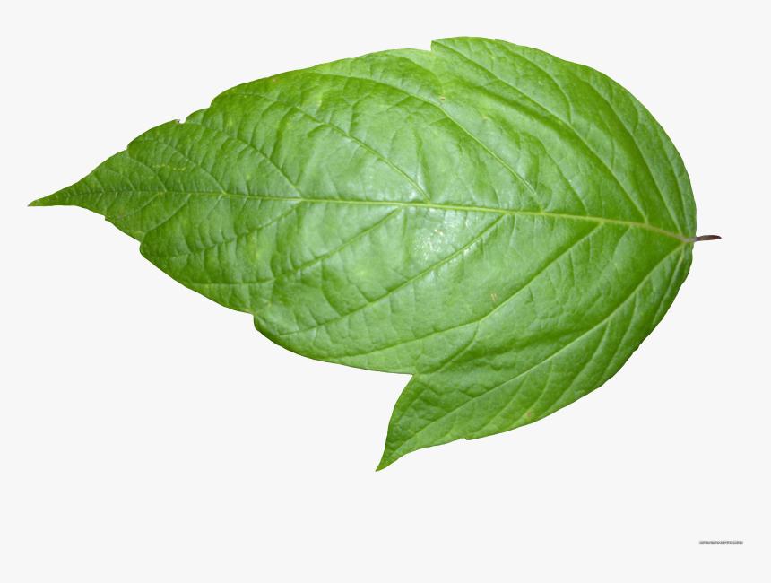 Transparent Christmas Leaves Png - Transparent Background Leaf Png, Png Download, Free Download