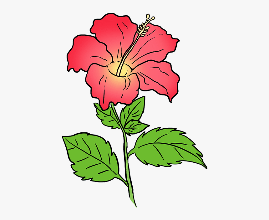 Hawaiian Flower Png - Drawing, Transparent Png, Free Download