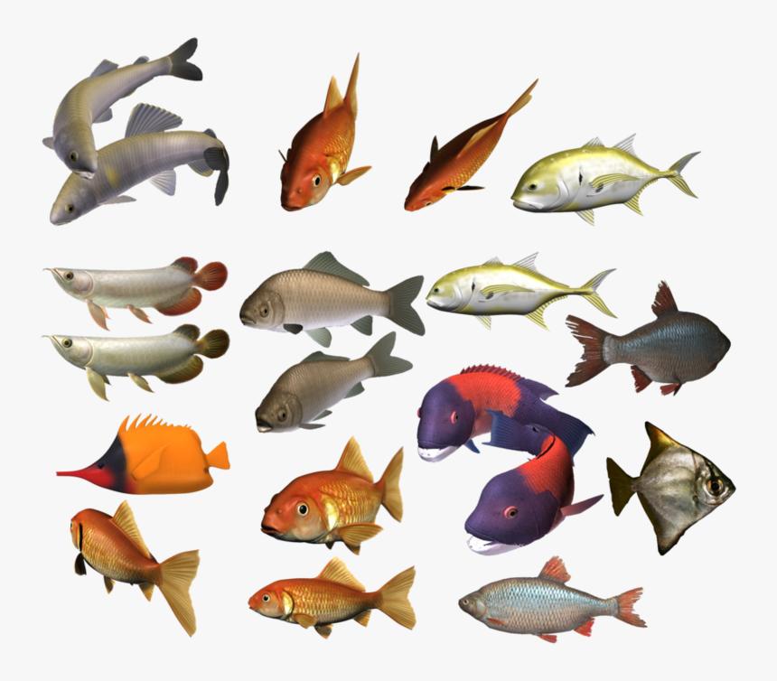 Colour Fish Images Png, Transparent Png, Free Download