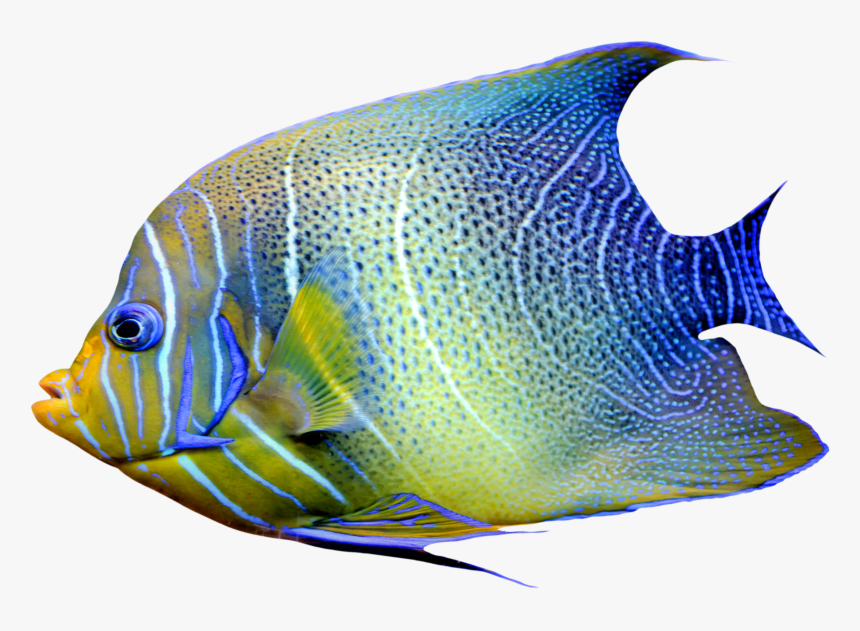 Realistic Fish Blue And Yellow Png Clipart - Fish Png, Transparent Png, Free Download