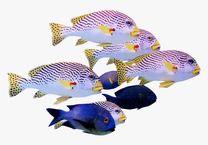 Fish Transparent School, HD Png Download, Free Download