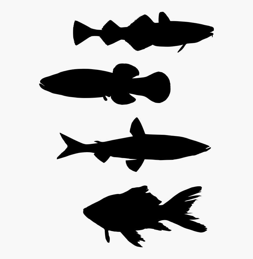 School Of Fish Transparent Clipart, HD Png Download, Free Download