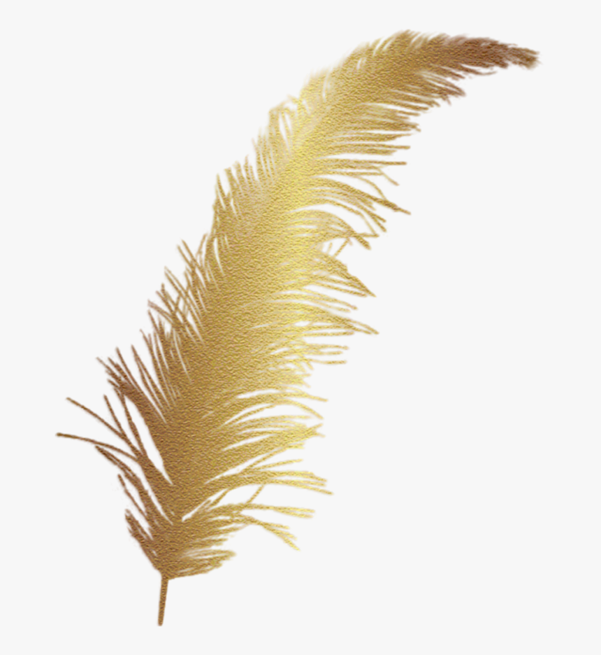 #feather #gold #accent #decal - Golden Feather Png, Transparent Png, Free Download