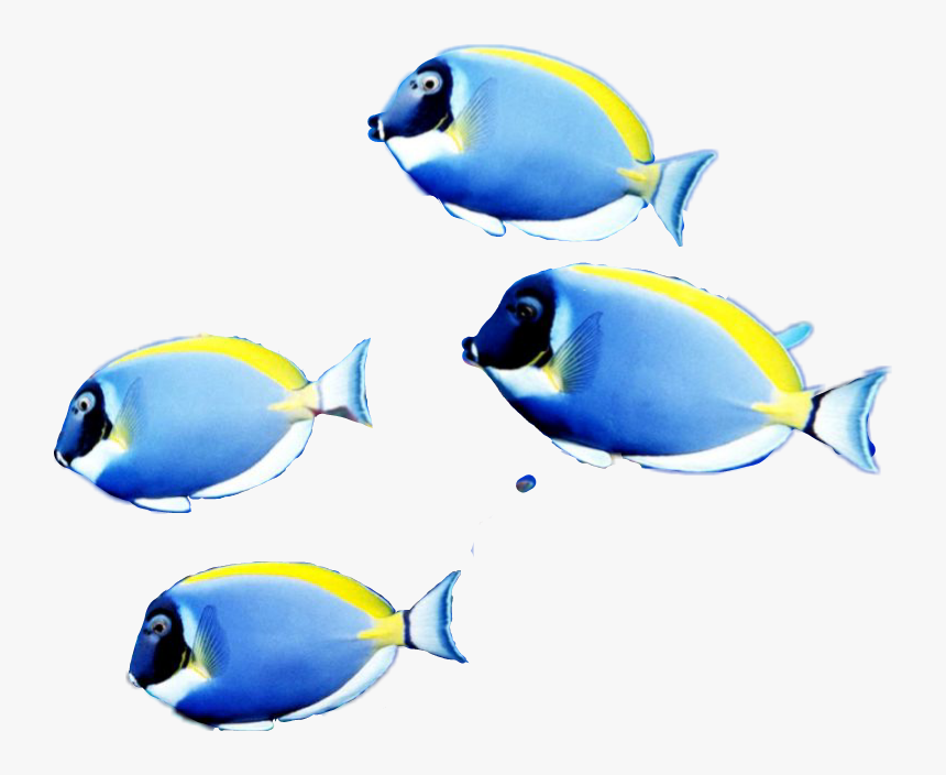 #picsartstickers I Just Made This School Of Fish Sticker - Coral Reef Fish, HD Png Download, Free Download