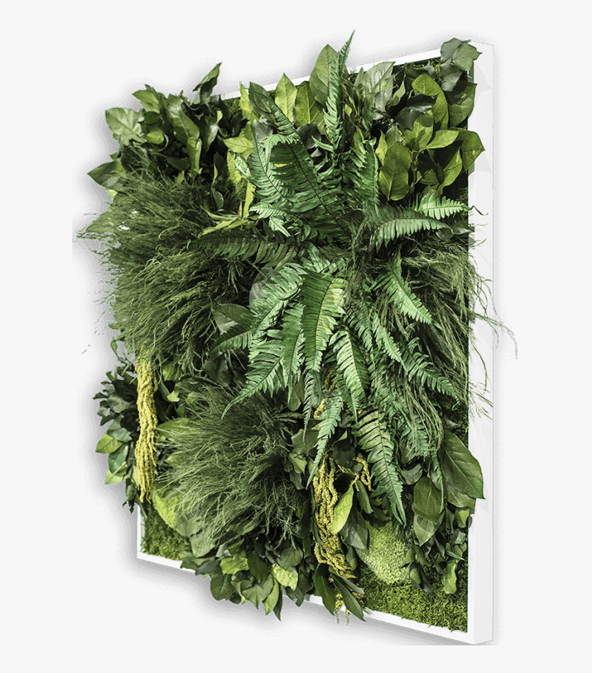 Plant Frame - Ostrich Fern, HD Png Download, Free Download