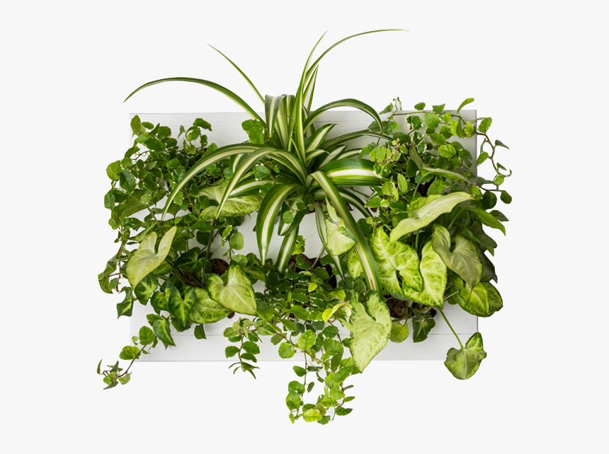 Transparent Vertical Garden Png - Indoor Garden Plants Png, Png Download, Free Download