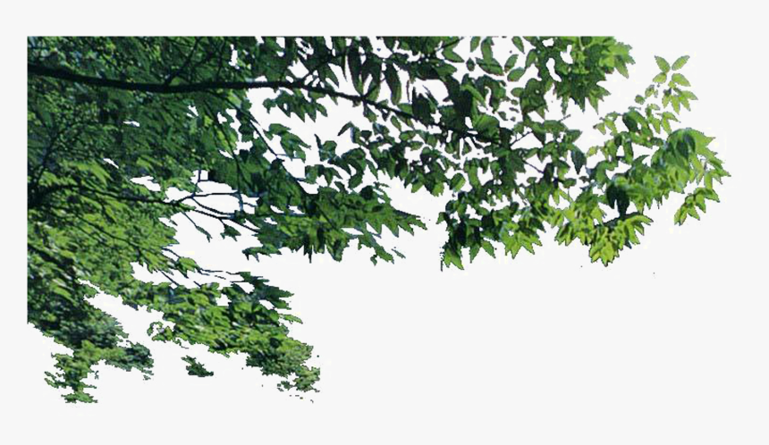 Euclidean Foreground Transprent Png Free Download Plant - Foreground Tree Branch Png, Transparent Png, Free Download