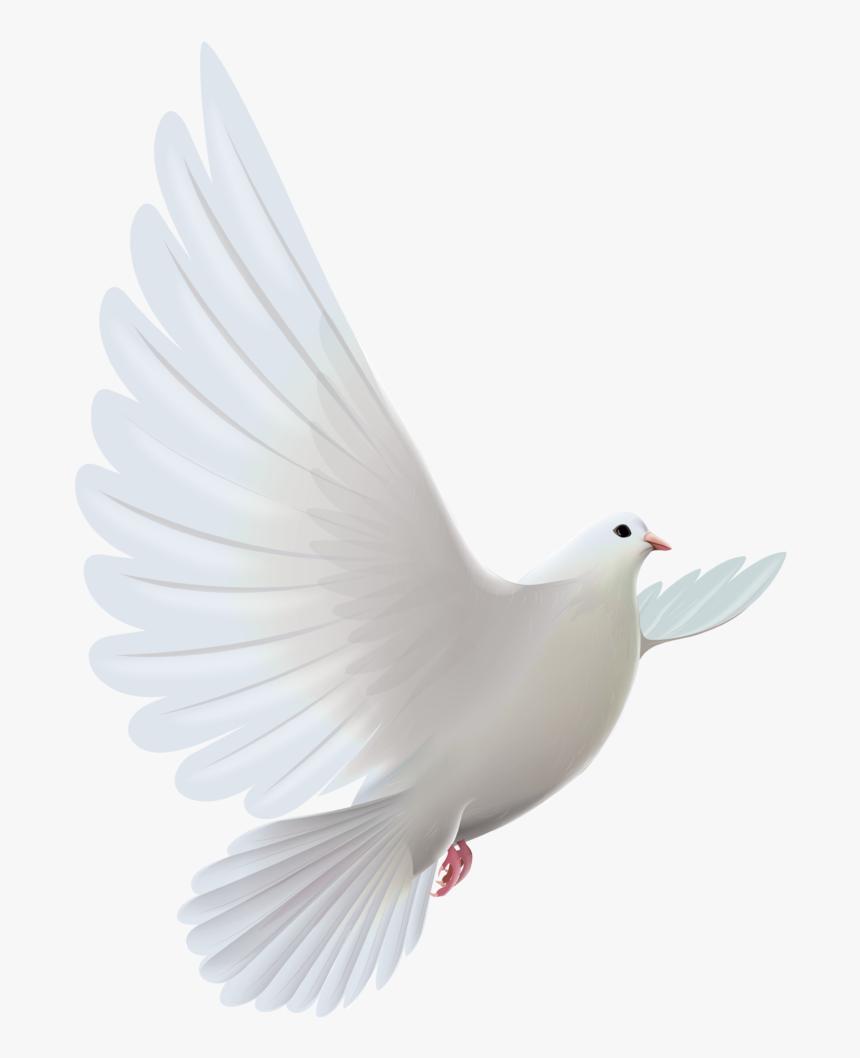 Clipart Bird Descending - Transparent White Dove Png, Png Download, Free Download