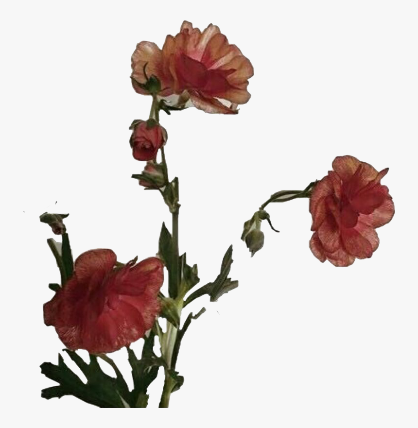 Aesthetic Flower Art Png Photos - Flower Aesthetic Png Transparent, Png Download, Free Download