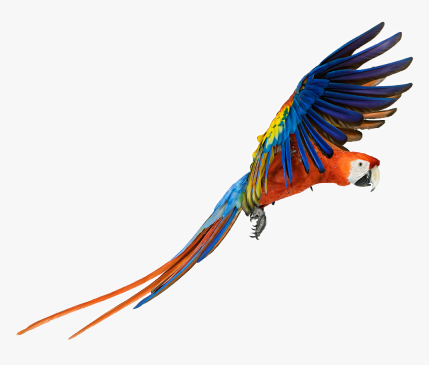 #parrot #bird #animal #color #colors #nature #fly #flying - Macaw Png, Transparent Png, Free Download