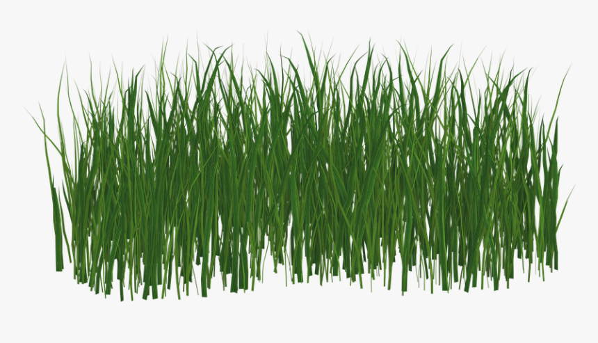 Grass,green,plant,grass Family,wheatgrass,red Pine,fodder,artificial - Transparent Png Format Grass Png, Png Download, Free Download