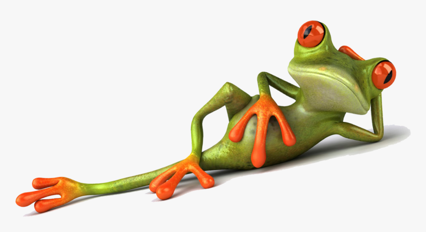 Animation Company In Bangalore - Frog, HD Png Download, Free Download