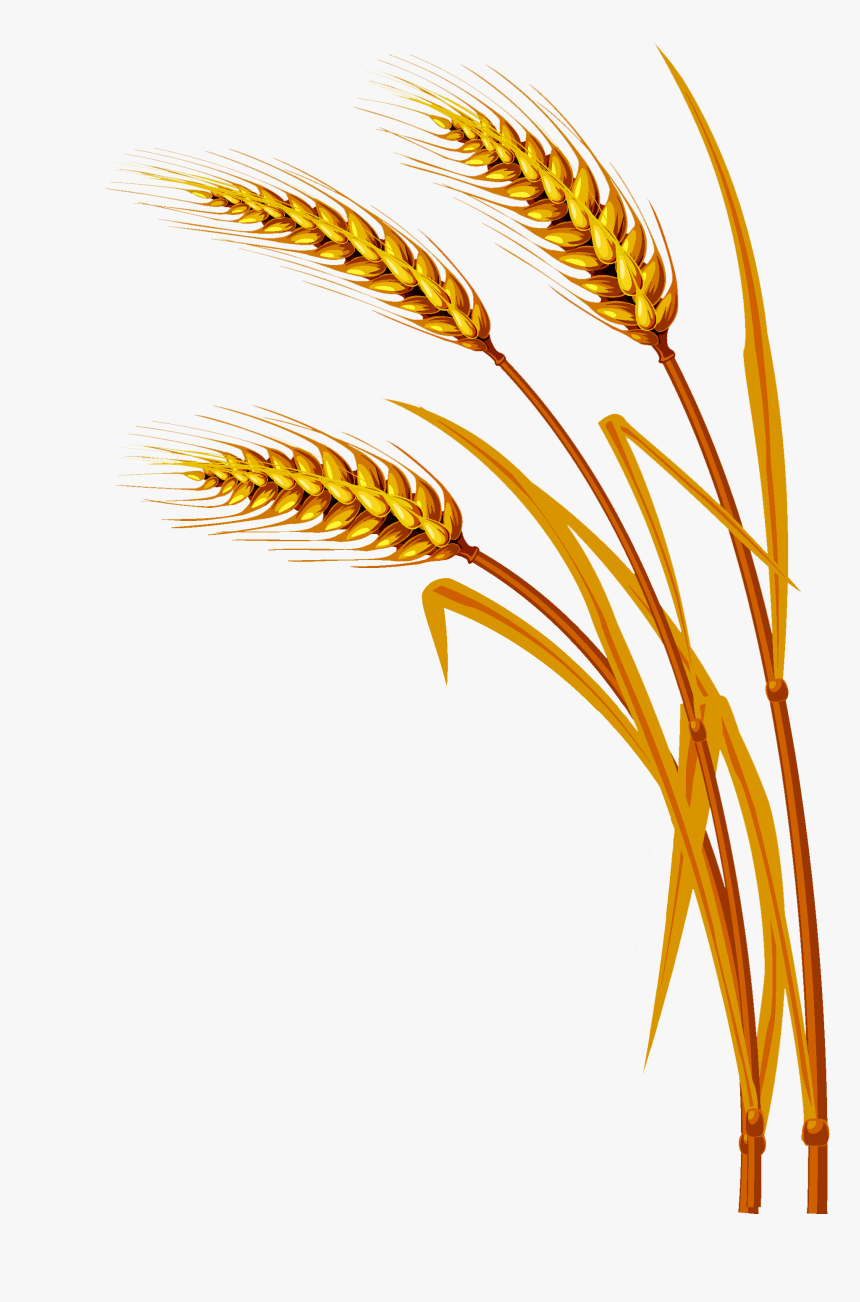 Transparent Wheat Clipart - Wheat Background, HD Png Download, Free Download