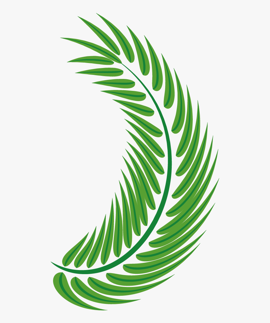 Transparent Palm Leaf Vector Png - Palm Trees, Png Download, Free Download