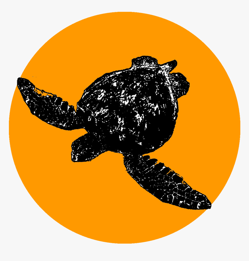 Olive Ridley Sea Turtle, Hd Png Download, Transparent Png, Free Download