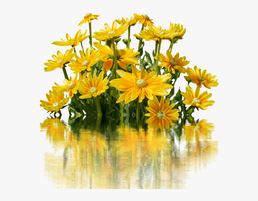 Flores Amarillos Png, Transparent Png, Free Download
