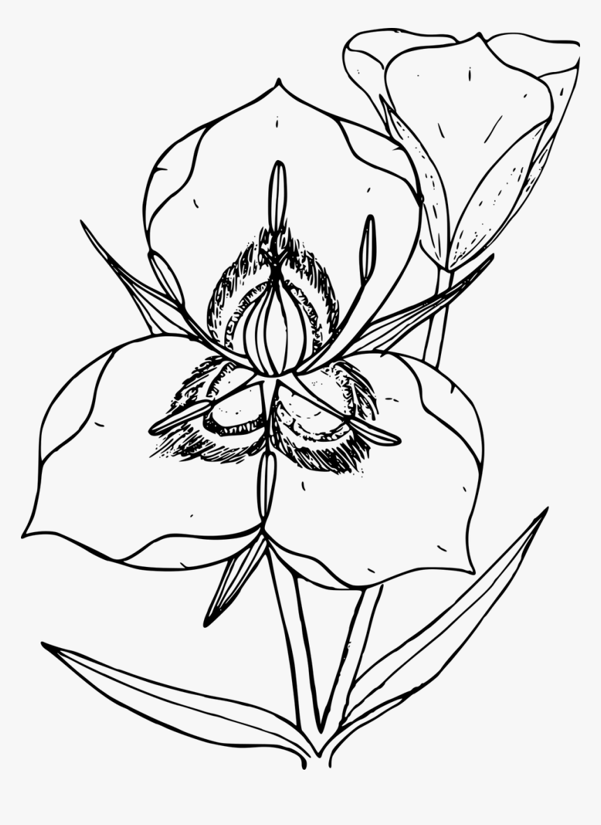 Wildflower Png, Transparent Png, Free Download