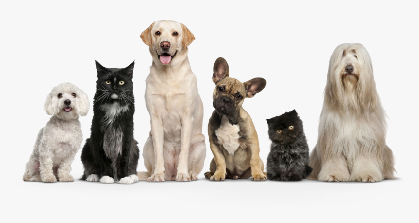 Dogs And Cats Png, Transparent Png, Free Download