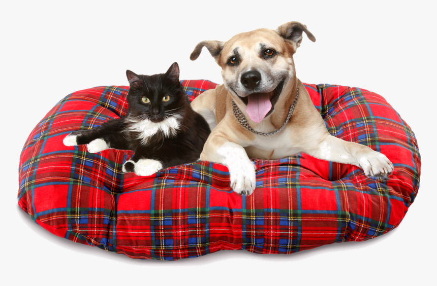 Transparent Dog Sitting Png - Dog And Cat Heartworm, Png Download, Free Download