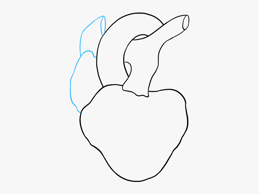 How To Draw Human Heart - Line Art, HD Png Download, Free Download