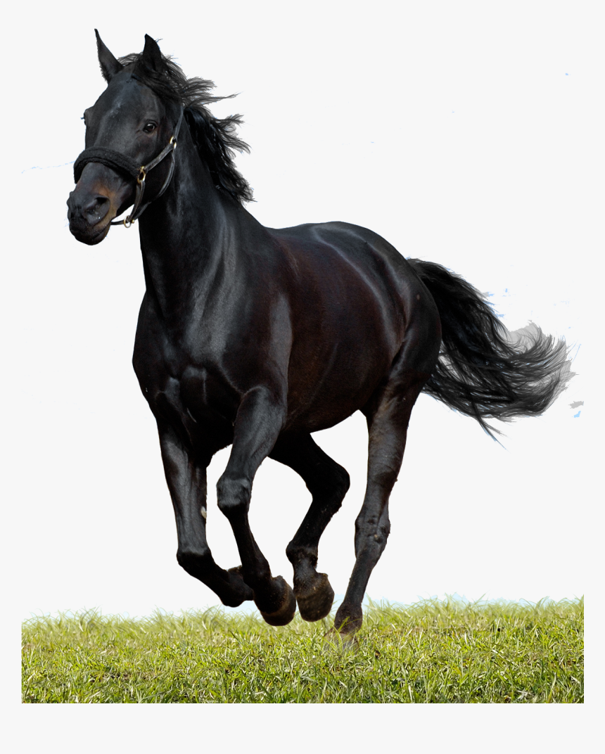 Alexander Equine Veterinary Services Beautiful Black Running Horses Hd Png Download Kindpng