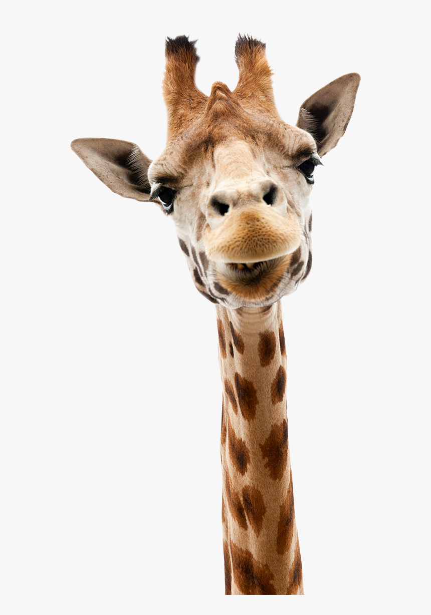 Head And Shoulders Above The Rest - Animals That Live In Niagara Falls, HD Png Download, Free Download