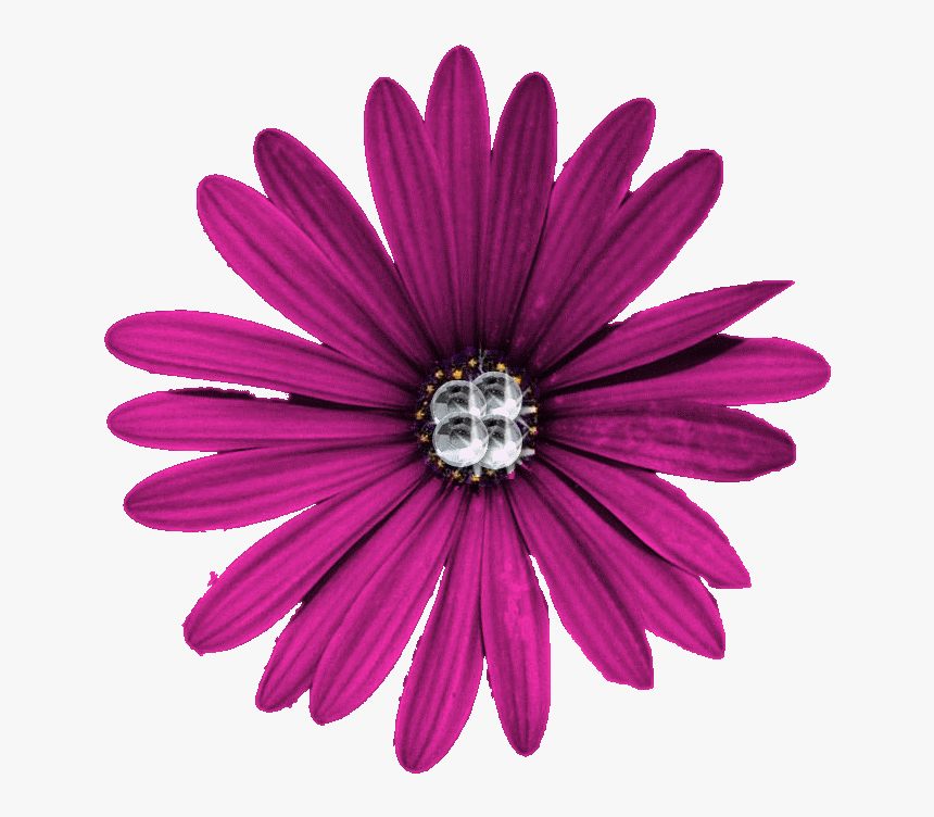 Purple Flower Png High Quality Download - Portable Network Graphics, Transparent Png, Free Download