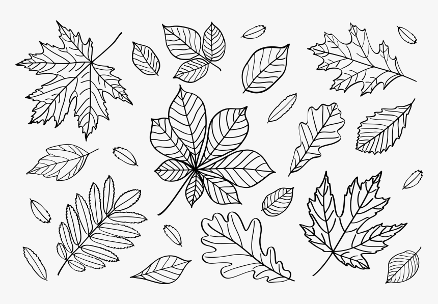 Transparent Fall Leaves Clipart - Outline Fall Leaves Clipart, HD Png Download, Free Download