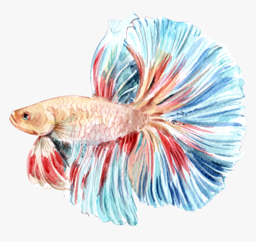 13 - Fish Products, HD Png Download, Free Download
